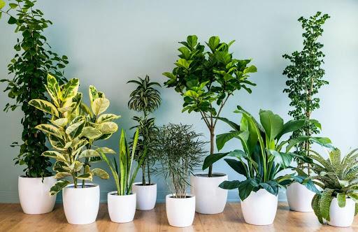 گیاهان فضای سبز داخلی