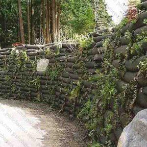 دیوار سبز طبیعی