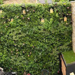 مزایای دیوارهای سبز