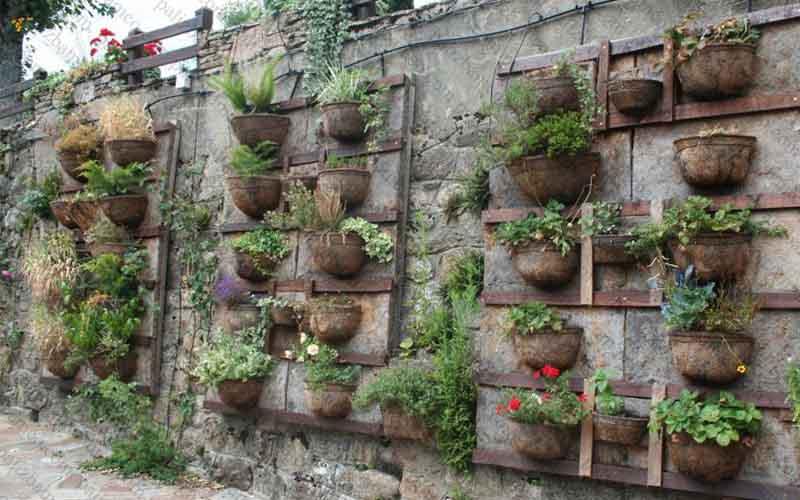 گیاهان گرینوال