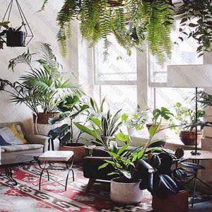 گیاهان مناسب سبز پاسیو
