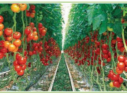 کشاورزی شهری در عراق